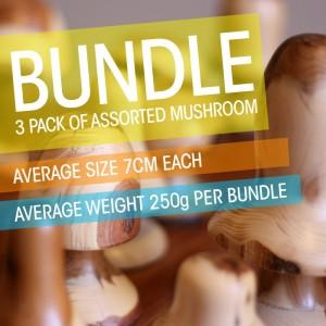 ye03-3 Whisperswood Bundle of assorted size mushrooms